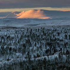 Stabbursdalen National park in Finnmark county, Northern Norway. Photo by Dmitri Korobtsov.