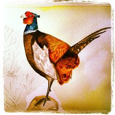 #acuarela de un #faisán #nonfinita #fotobirding #watercolor #pheasant #birdfreaks - @pacotorresill- #webstagram
