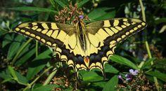 #istanbul #kral #kelebek #king #butterfly #vsco #vscocam
