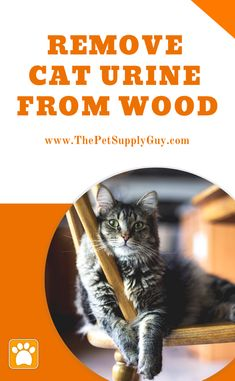 How To Remove Cat Urine From Wood Furniture (Cat Care Guide) Cat Urine Remover, Pet Urine, Odor Remover, Cleaning Cat Urine, Dumb Cats, Cat Urine Smells, Cat Pee, Cat Care Tips, Cat Facts
