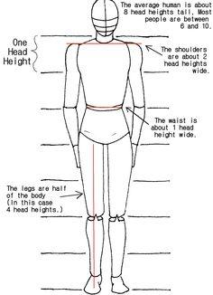 Body Proportions Tutorial by crazy-fae.deviantart.com on @deviantART