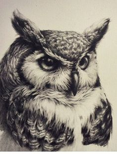 Owl tattoo, realistic, black and white