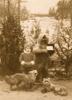 Child posing with taxidermy bear & foxes Time Pictures, Mystery Of History, Kid Poses, Street Photo, Vintage Photographs, Natural History, Spirit Animal, Old Photos, Vintage Christmas