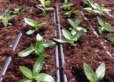 Cool  Smart Ways to Put Your Garden on Autopilot