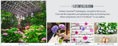 Endless Summer Life in Full Bloom Photo Competition