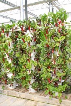 une plantation de fraisiers dans des goutti re hors sol avec arrosage planter des fraisiers. Black Bedroom Furniture Sets. Home Design Ideas