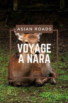 Nara est particulièrement connue pour ses cerfs qui se baladent en totale liberté ! Nara, Destinations, Roads, Movie Posters, Movies, Travel, Small Towns, History, Road Routes