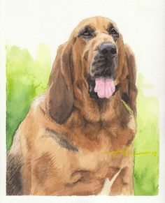 Hound Dog Watercolor Portrait Drawing by Mike Theuer