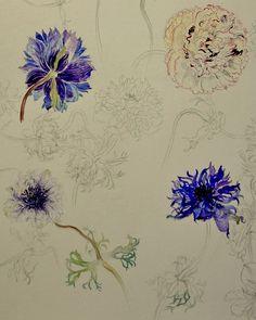 Ranunculus(Part)-Chisako Fukuyama, Pencil drawing,Watercolor