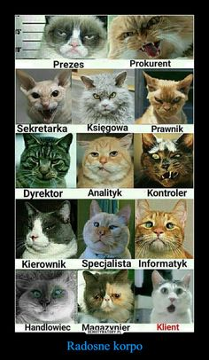 Radosne korpo – Wtf Funny, Funny Cats, Funny Jokes, Hilarious, Happy Animals, Funny Animals, Pokemon, Grumpy Cat, Animal Memes