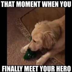 Source by funmemepics dog dog memes dog videos videos wallpaper dog memes dog quotes dogs dogs pictures dogs videos puppies puppy video Funny Animal Jokes, Funny Dog Memes, Funny Dog Videos, Funny Animal Pictures, Cute Funny Animals, Funny Cute, Funny Dogs, Cute Dogs, Dog Humor