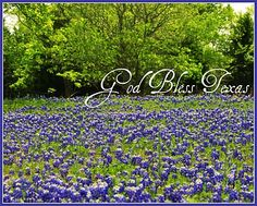 Bluebonnets grow wildly in Waxahachie, Texas.  Photo by Sonia Hernandez Doneghue for Through These Eyes Visual Art.