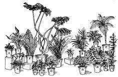 Часть VII. Комнатные растения / Полная энциклопедия молодой хозяйки