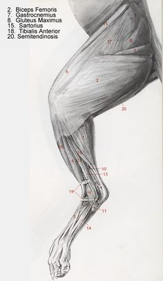lateral view of cat leg