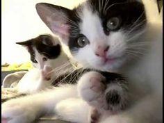 KITTENS - YouTube Great North, Kittens, Cats, Art World, Action, Youtube, Animals, Cute Kittens, Gatos