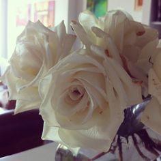 White roses.  Photo by isalara • Instagram