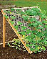 EARL's Kitchen Gardens--vertical gardening