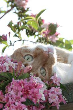 Flowers + Cat <3 #cat #pink
