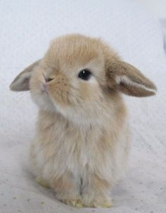 Animals beautiful, funny animals, animals and pets, smiling animals, cute. So Cute Baby, Animals And Pets, Funny Animals, Smiling Animals, Animal Pictures, Cute Pictures, Rabbit Pictures, Cute Little Animals, Adorable Baby Animals