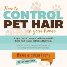 how to stop your cat from shedding