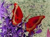 Glorious red Butterfly on Purple Flowers. Butterfly Pictures, Red Butterfly, Butterfly Kisses, Butterflies Flying, Beautiful Butterflies, Beautiful Flowers, Flying Insects, Butterfly Wallpaper, My Favorite Color