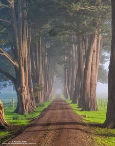 Cypress Road - Marin County - California - USA