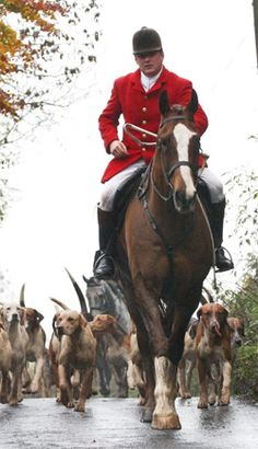 The Myopia Hunt welcomes new Huntsman, Brian Kiely. Tally Ho, Fox Hunting, The Fox And The Hound, Hunter Jumper, Sports Figures, Equestrian Style, Horse Riding, Constellation, Nature Pictures