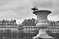 Paris  #paris #winter #crow