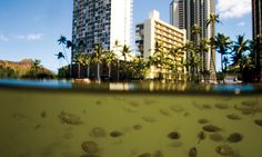 It Came From the Ala Wai: 6 Strange Creatures That Thrive in Waikiki's Sewage Filled Canal - Honolulu Magazine - August 2014 - Hawaii