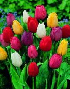 Tulips make me smile :)