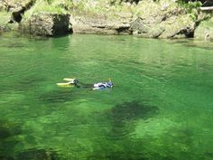 You can snorkel not only in the sea but also in a river! Try river snorkeling in the heart of Europe, in Austria. Explore something new, make new memories! Heart Of Europe, Snorkeling, Austria, Around The Worlds, River, Sea, Explore, Diving, Alps