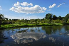 Reflections by Mark VanDyke Photography, via Flickr Meadowlark Botanical Gardens, August 2011