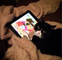 animali-iPad
