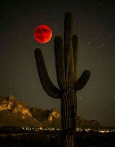Saguaro and blood moon 2015 Foto Nature, Shoot The Moon, Moon Pictures, Moon Signs, Red Moon, Blood Moon, Foto Art, Beautiful Moon, Cacti And Succulents