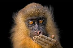 Bioko Island, Equatorial Guinea Photo by Joel Sartore © 2008 National Geographic