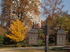 Fall Scenery-Daejeon-South Korea Cities In Korea, Daejeon, Autumn Scenery, Korean Wave, Street Culture, North Korea, Street Art, Asia, Waves