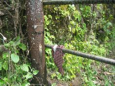 some guy lost his underwear.