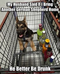 That can be arranged. (the husband-not the dog!) #hilarious #doglovers