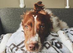 Dangerous Fur Styling | The Bark