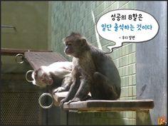 원숭이해_현실적인명언10가지10