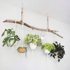Room With Plants, House Plants Decor, Plant Decor, Indoor Planters, Diy Planters, Balcony Hanging Plants, Plants Indoor, Creation Deco, Plant Shelves