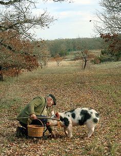 Truffle Hunting - click on photo to read the absolutely fascinating story.