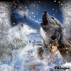 Blingee Wolves | spirit of the winter wolf palavras chave of spirit the winter wolf