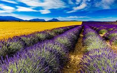 Download wallpapers France, lavender, field, summer, Valensole, HDR, Europe
