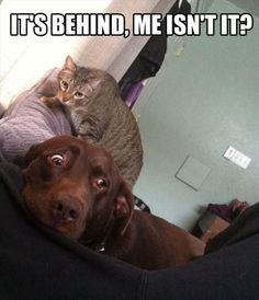 Bahaha reminds me of the cat v dog wars that go on in my house