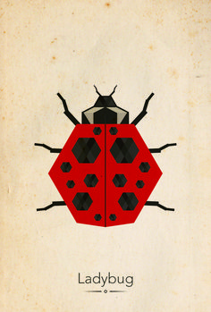 Geometric ladybug