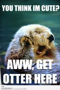 you otter check this out. otter humor is the best Animal Captions, Funny Animals With Captions, Animal Puns, Animal Quotes, Funny Animal Pictures, Humorous Animals, Funniest Pictures, Animal Humor, Funny Photos