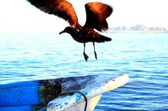 Taking off from a Panga!