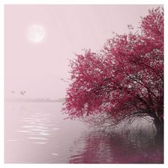 Full Moon On The Lake Canvas Giclee Print