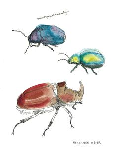 beetle, beetle and beetle.  pendrawing combined with watercolor by Maartje van den Noort